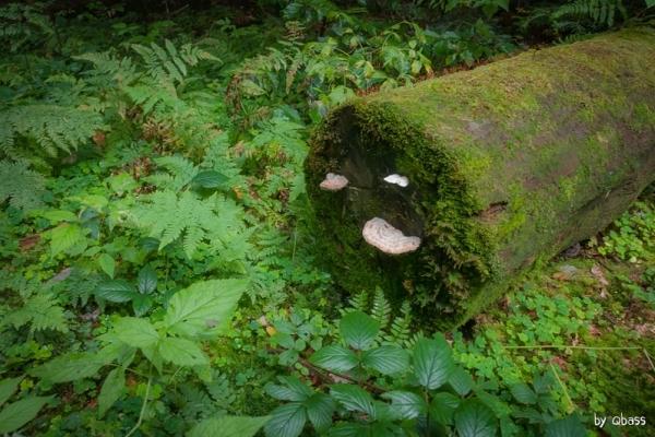 Leśne żarty roślin