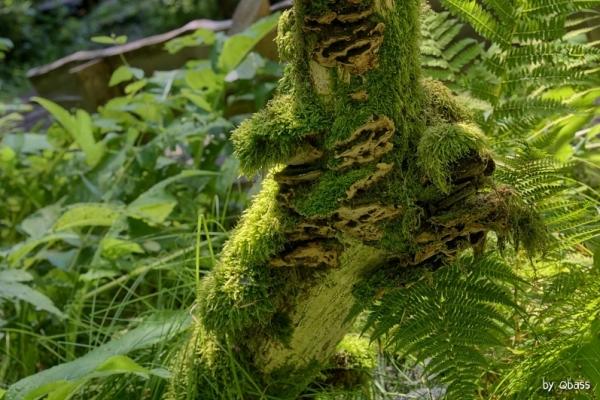 Tajemnicza Roztoczańska roślinność
