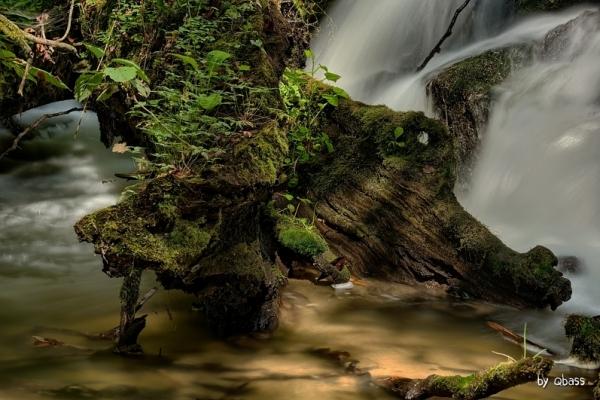Tanew - Piękno w naturze