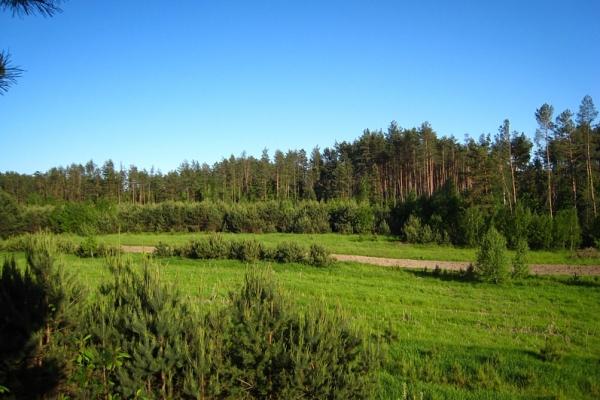 Oseredek - pola i lasy na roztoczu