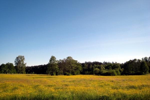 Oseredek - pola i łąki na roztoczu