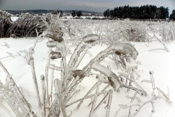 Zimowa aura roztocza